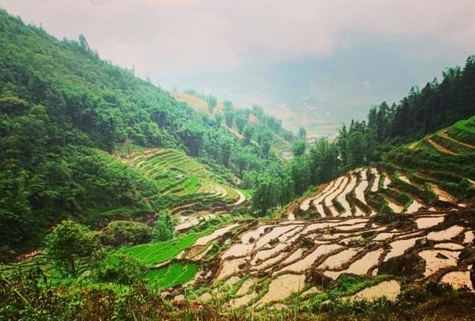 Sapa Rice Terraces in Vietnam